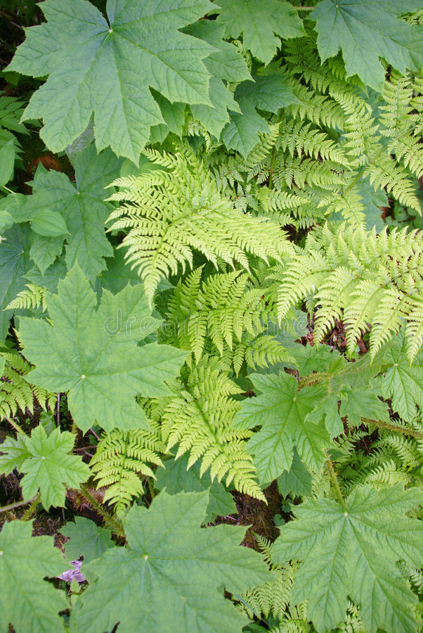 Ferns And Underbrush Royalty Free Stock Images