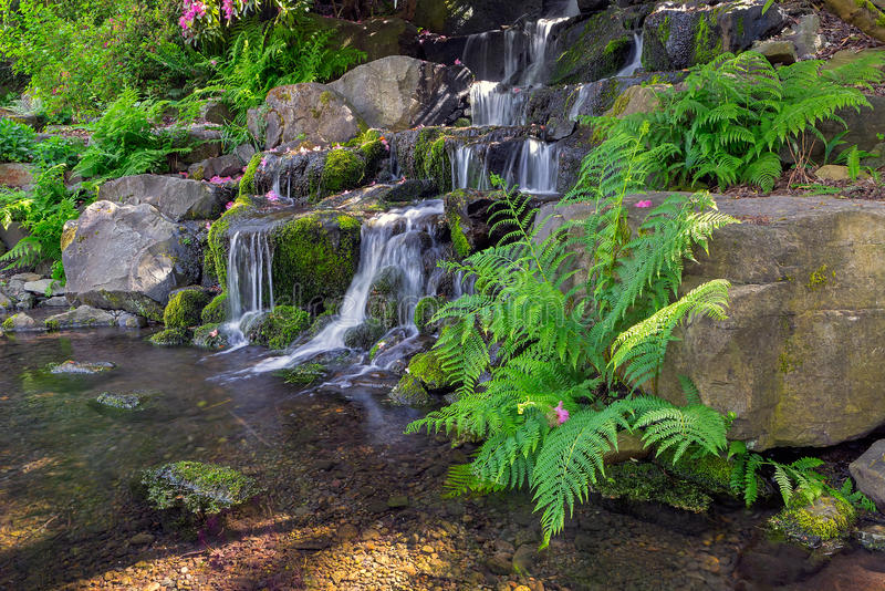 Ferns by Waterfall in Crystal Springs Rhododendron Garden stock photography