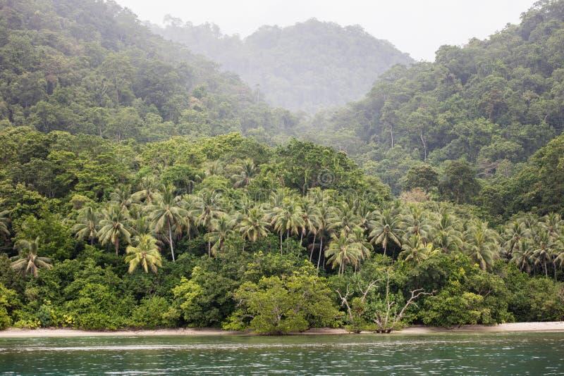 Fernstrand und Regenwald in Papua-Neu-Guinea lizenzfreie stockfotografie