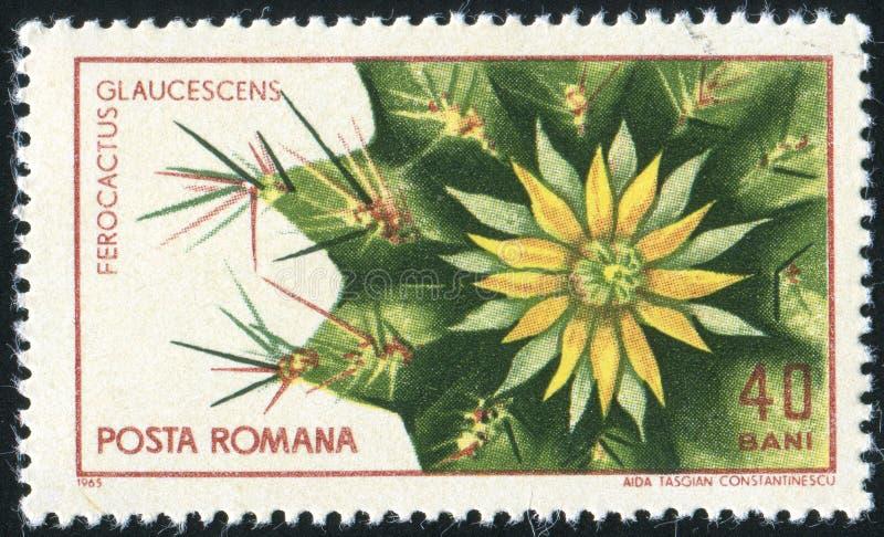 Ferocactus imagem de stock