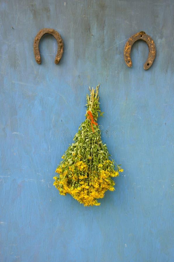 Ferradura grande da formiga dois do wort de St Johns do Hypericum das flores frescas do grupo imagens de stock royalty free