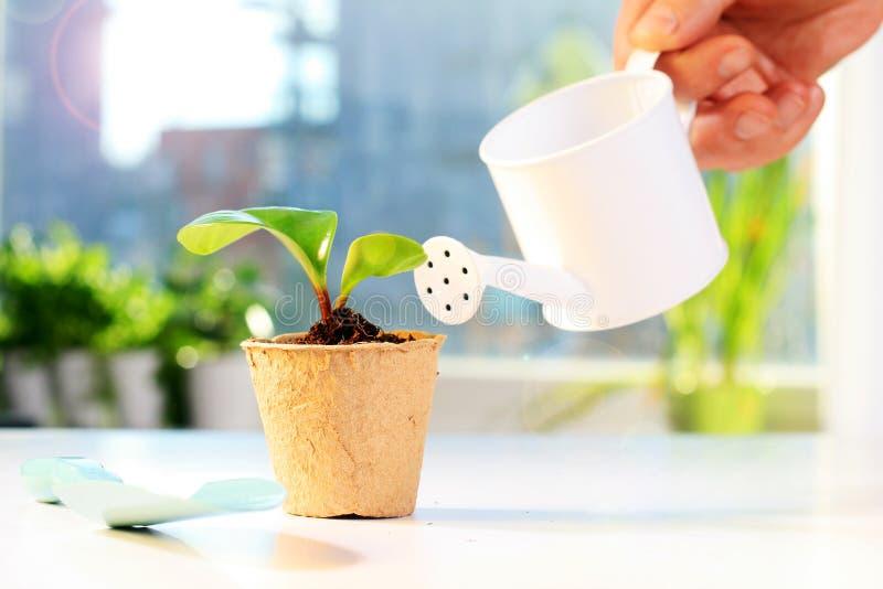 Ferramentas de jardim e planta pequena fotos de stock