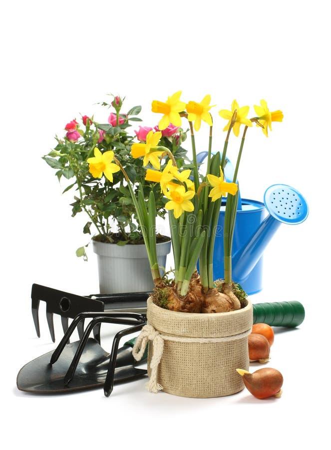 Ferramentas de jardinagem   imagem de stock royalty free