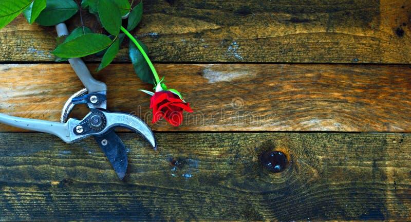 Ferramentas de jardinagem na tabela de madeira velha imagens de stock