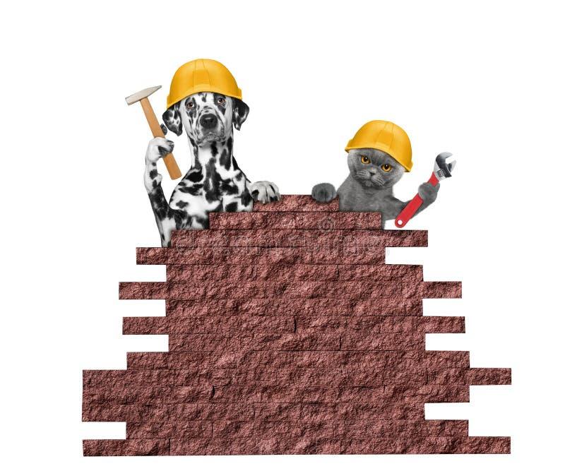 Ferramentas de terra arrendada dos construtores do cão e gato em suas patas ilustração stock