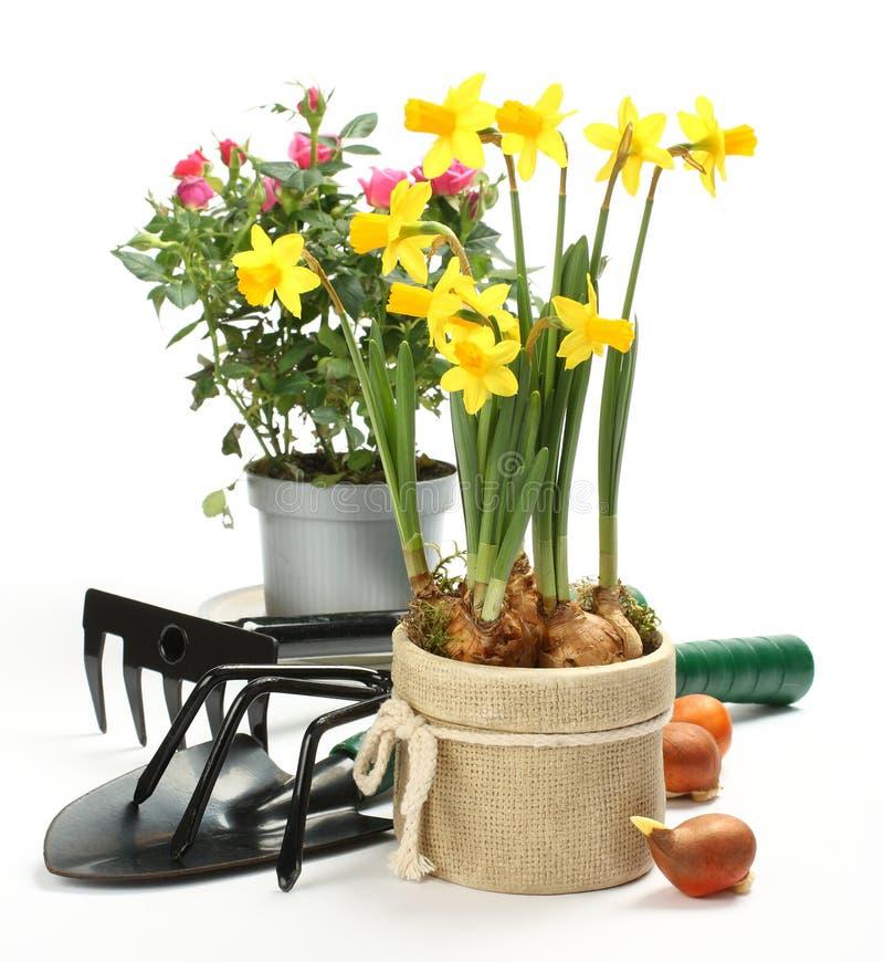 Ferramentas e flores de jardinagem isoladas no branco imagens de stock royalty free