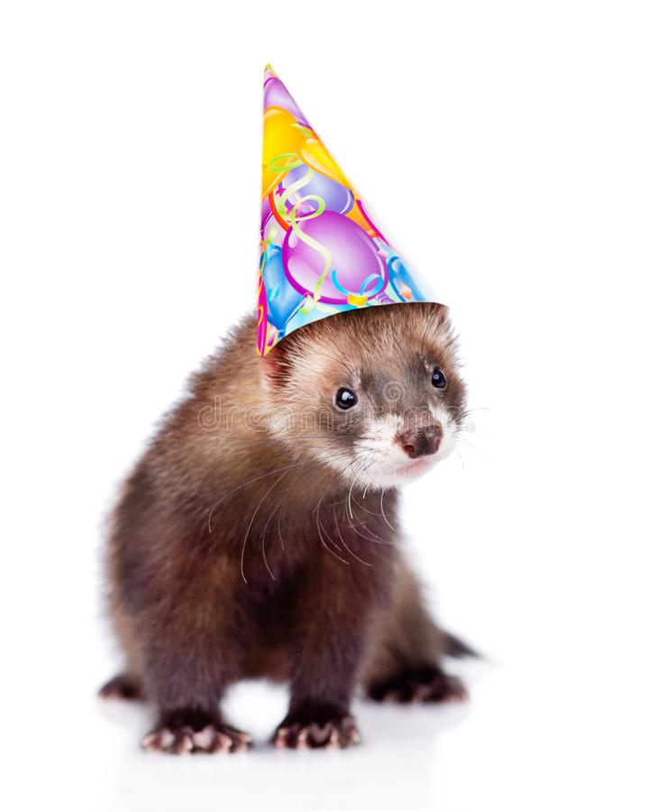 Ferret in birthday hat looking at camera. isolated on white. Background stock photo