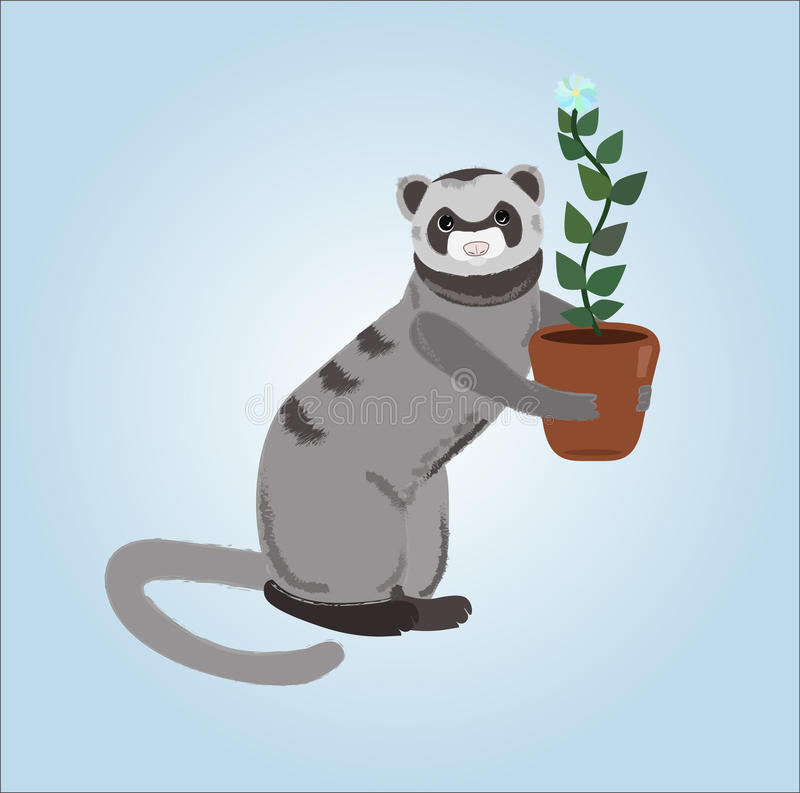 Ferret with a flowerpot. Illustration of cartoon ferret holding flowerpot on a blue background stock illustration