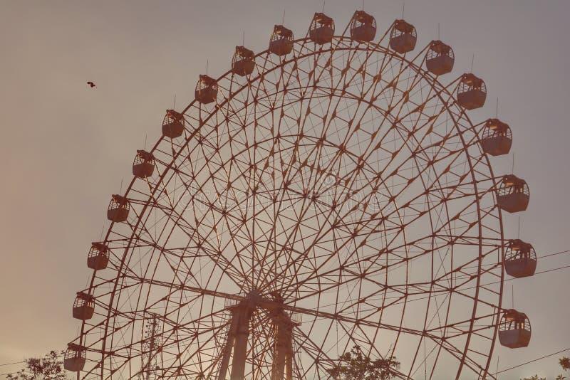 Ferris ptak i koło zdjęcia stock