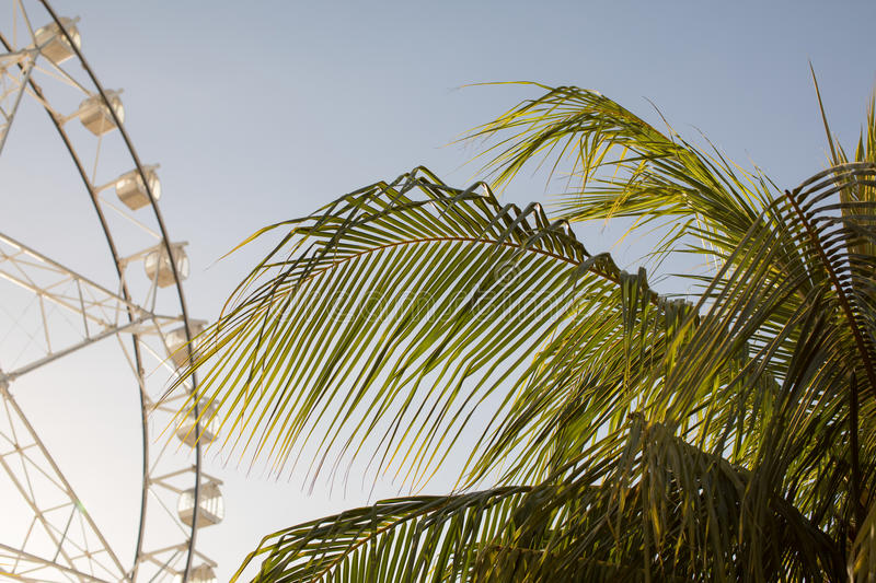 Ferris wheel and palm tree. At sunny day stock image