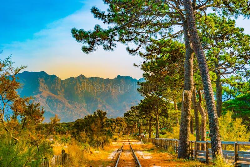 Ferrocarril en Calvi entre pinos, isla de Córcega, Francia imágenes de archivo libres de regalías