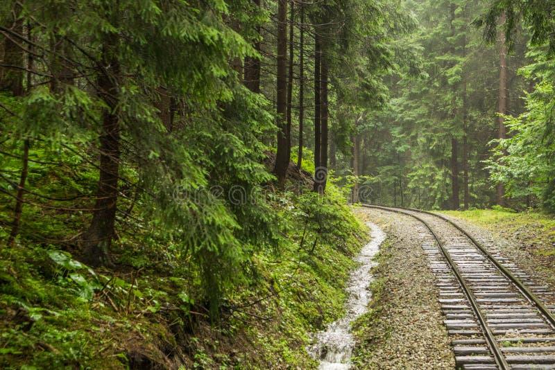 Ferrocarril a través del bosque imagen de archivo libre de regalías