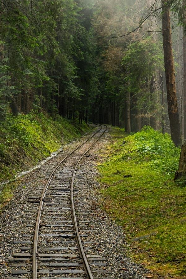 Ferrocarril a través del bosque fotos de archivo libres de regalías