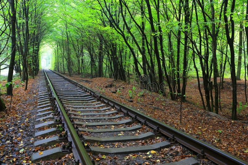 Ferrovia in foresta immagine stock libera da diritti