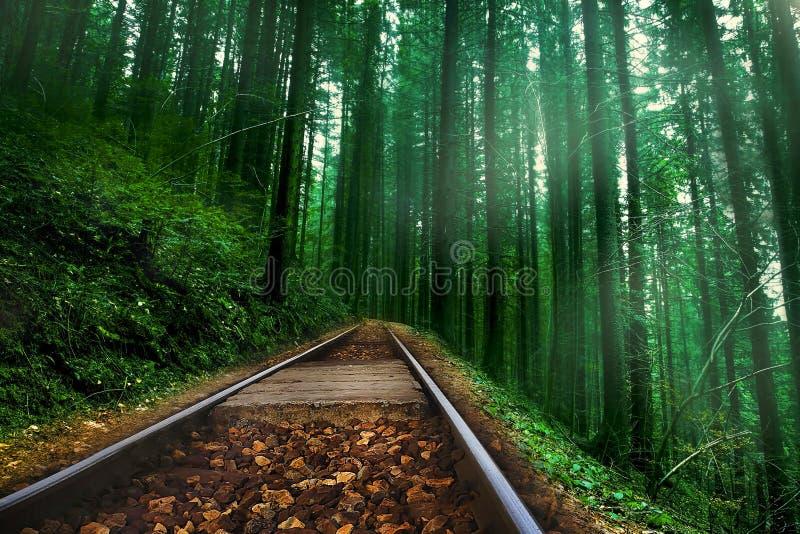 Ferrovia in foresta nebbiosa verde fotografia stock