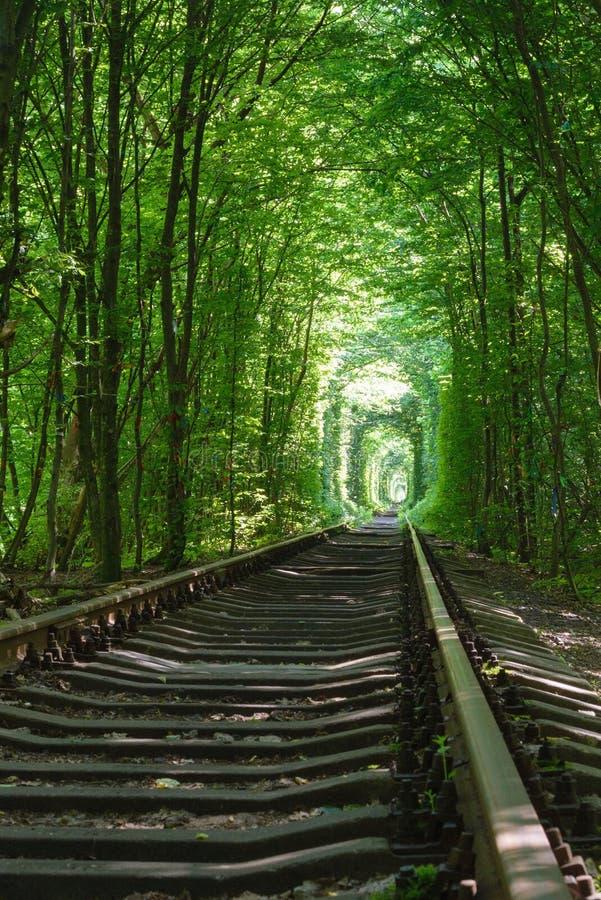 Ferrovia fra gli alberi che creano un tunnel delle foglie verdi fotografia stock libera da diritti