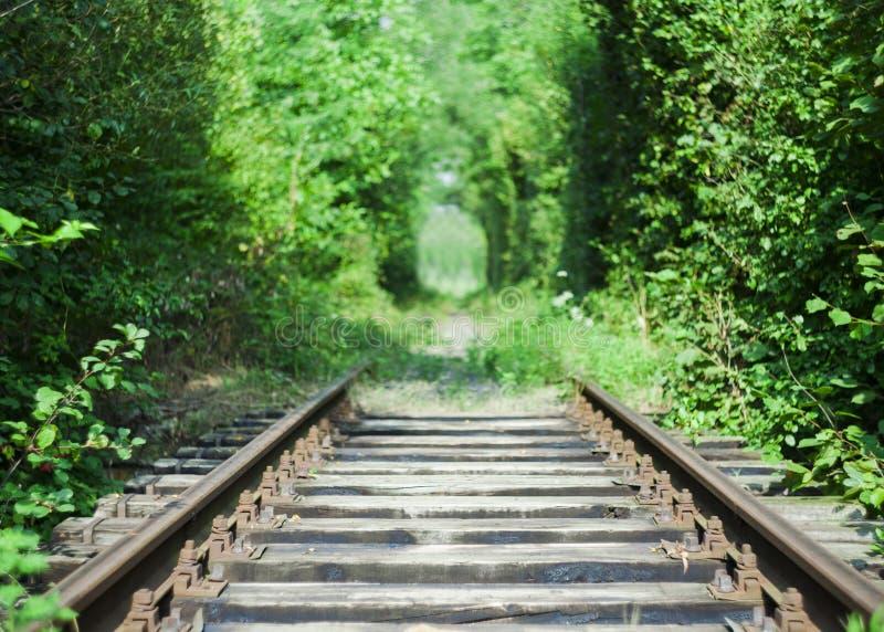 Ferrovia a fuoco ed alberi immagini stock libere da diritti