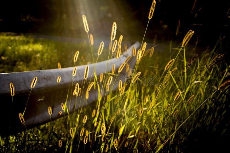 Ferrovia in guardia dell'erba del grano sulla vecchia strada campestre al sole immagine stock