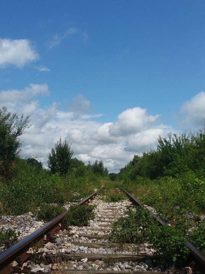Ferrovia invasa con vegetazione fotografia stock