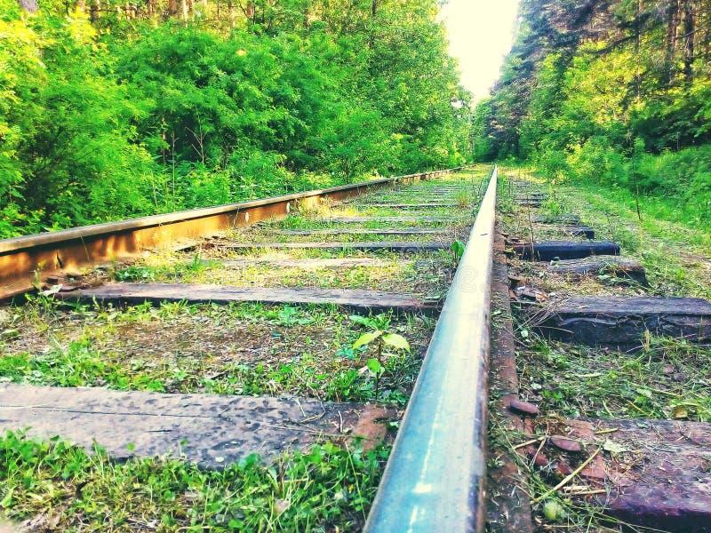 Ferrovia nella foresta fotografia stock libera da diritti