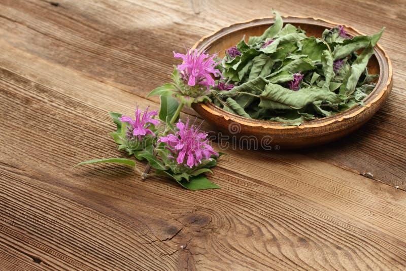 Fersh and dried  bergamot. Flowers of bergamot, Monarda didyma, on woodem board stock photos