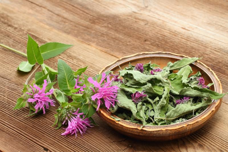 Fersh and dried  bergamot. Flowers of bergamot, Monarda didyma, on woodem board stock photo