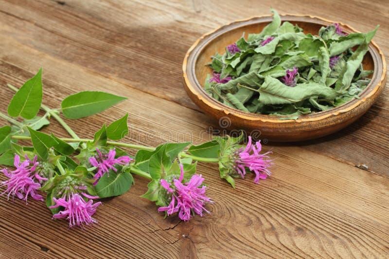 Fersh and dried  bergamot. Flowers of bergamot, Monarda didyma, on woodem board stock image