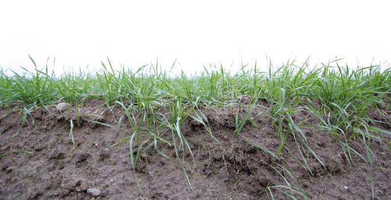 Fertile Soil stock image