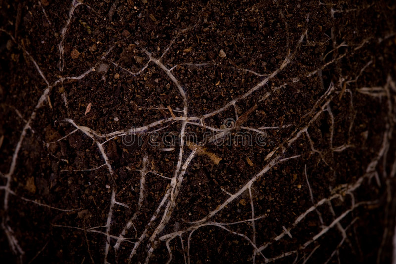 Fertile soil with roots stock image