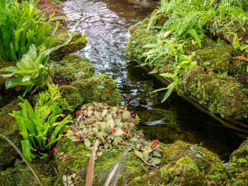 Fertile Tropical Garden. stock image