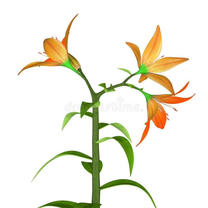 Fertiliz-flor dos angiospermas ilustração do vetor