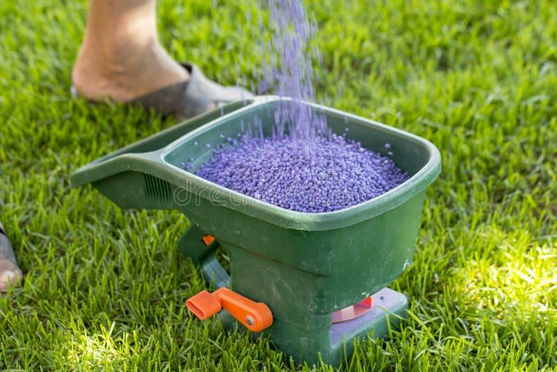 Fertilización manual del césped en patio trasero en tiempo de primavera Cierre para arriba foto de archivo