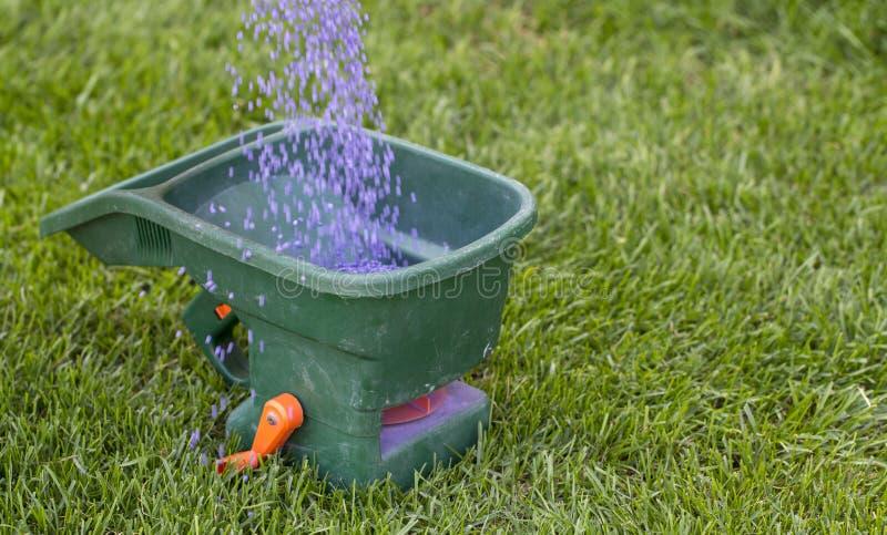 Fertilización manual del césped en patio trasero en tiempo de primavera Cierre para arriba fotografía de archivo libre de regalías