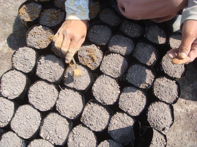 Fertilizante de la palma de aceite foto de archivo