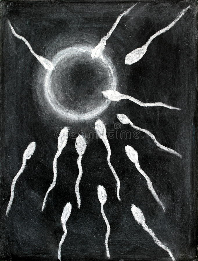 Fertilization of sperm and egg drawing with chalk on blackboard royalty free stock photos