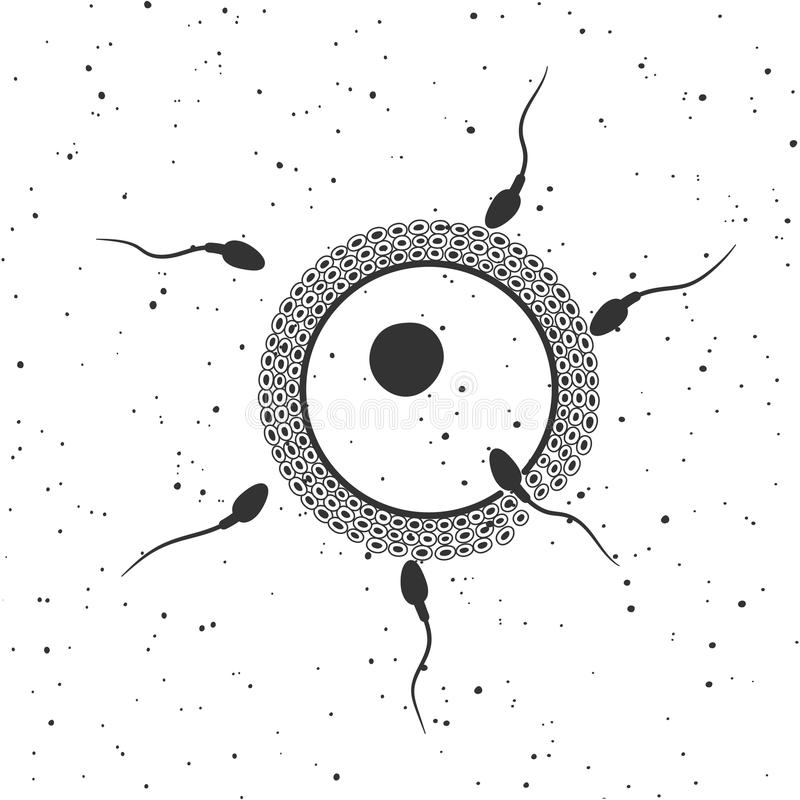 Fertilized egg with sperm. Vector illustration. Concept of reproductive medicine and insemination royalty free illustration