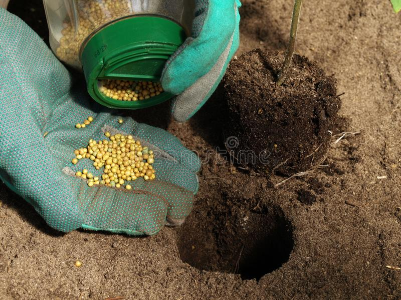Download Fertilizer for tomatoes stock photo. Image of fertilize - 24541110