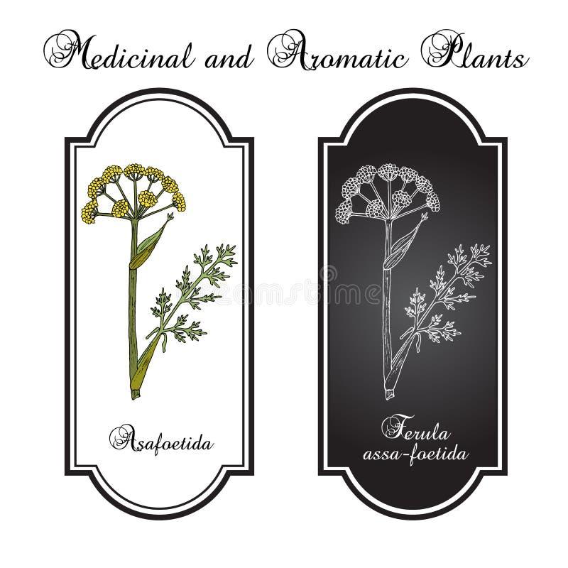 Ferula assa foetida dell'assafetida, pianta medicinale royalty illustrazione gratis