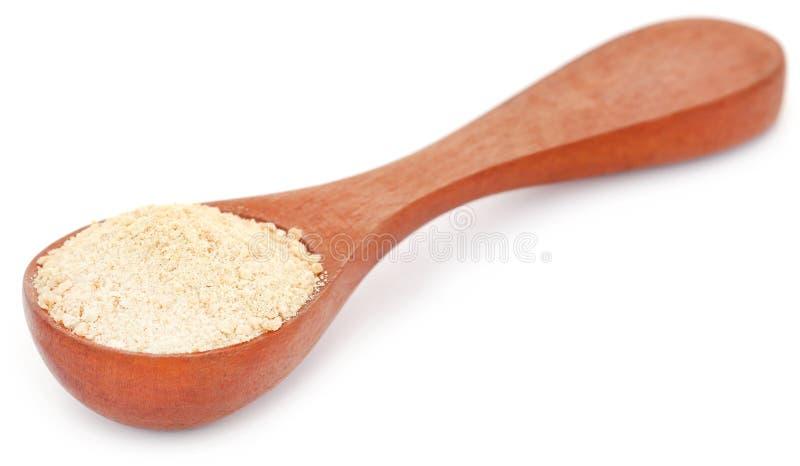 Ferulaassafoetida eller Hing krydda royaltyfri bild