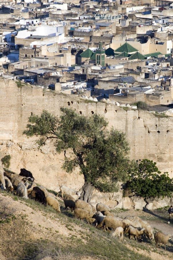 fes medina外面摩洛哥 免版税库存照片