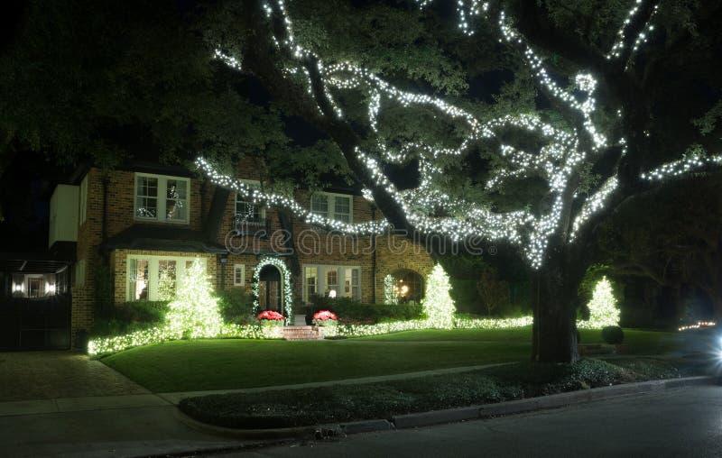 Festões leves em arbustos e no grande carvalho Decoração do Natal Wi imagens de stock royalty free