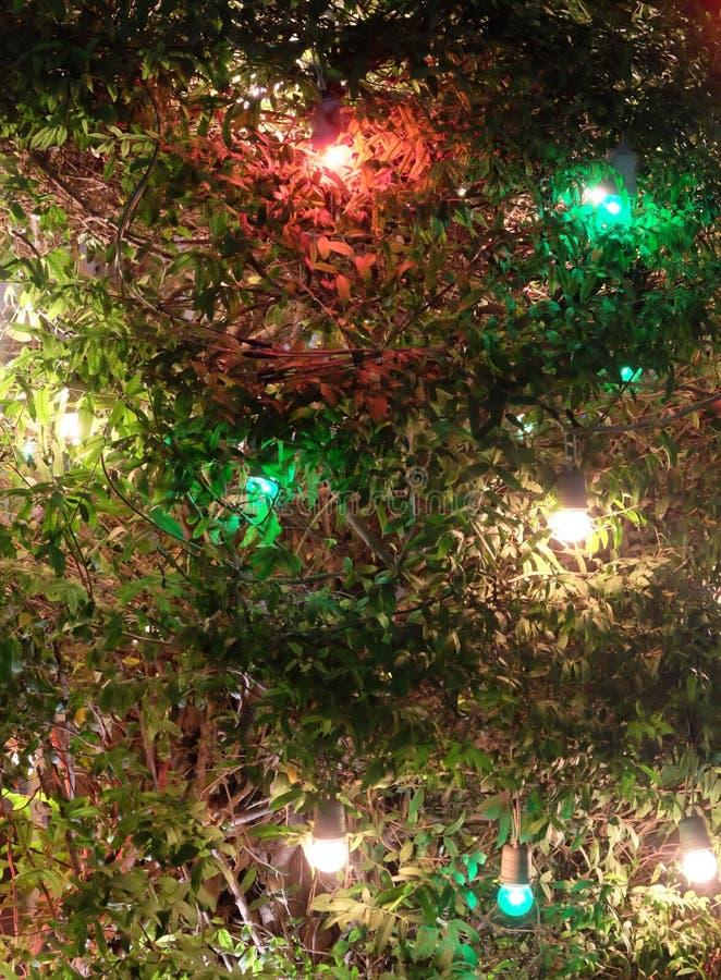 Fest?o nos ramos de um arbusto, fundo do Natal fotos de stock