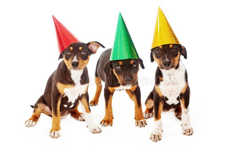 Festa de anos do cachorrinho imagem de stock royalty free