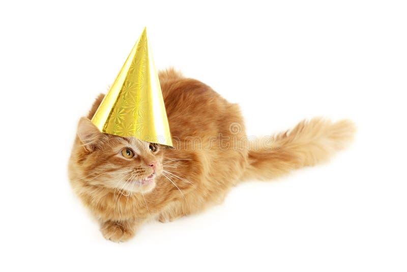 Festa del gattino con la protezione dorata di compleanno fotografia stock