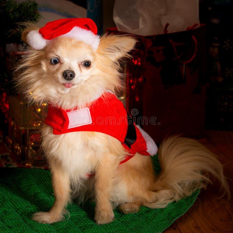 Festa di Natale canina immagine stock