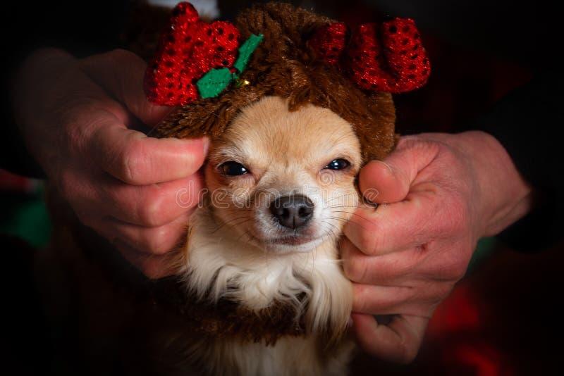 Festa di Natale canina fotografie stock libere da diritti