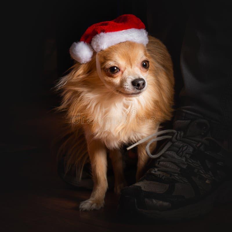 Festa di Natale canina fotografie stock