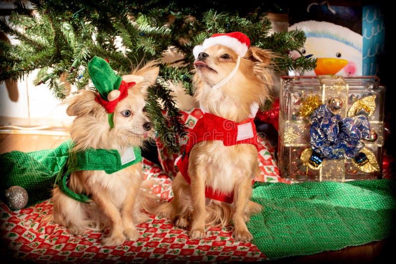 Festa di Natale canina fotografia stock