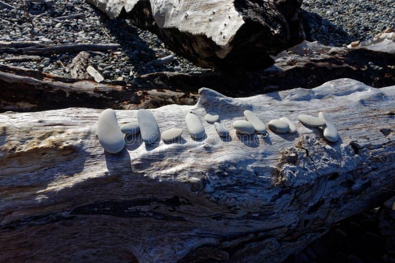 Festa, scritta in pietre su un tronco di albero sulla spiaggia immagini stock libere da diritti