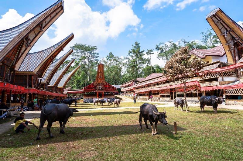 Festivais tradicionais de Torajan em Sulawesi fotografia de stock